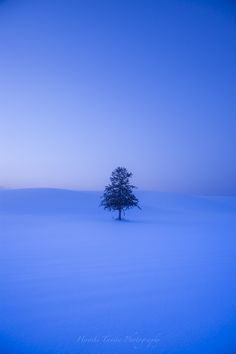 Photo of 春よ来いの木 blue to moderate in Furano-shi, hokkaidō, Japan Free Wallpaper Backgrounds, Nature Wallpaper, Beautiful Landscape Wallpaper, Beautiful Landscapes, Nature Pictures, Beautiful Pictures, Kind Of Blue, Blue Aesthetic, Winter Scenes