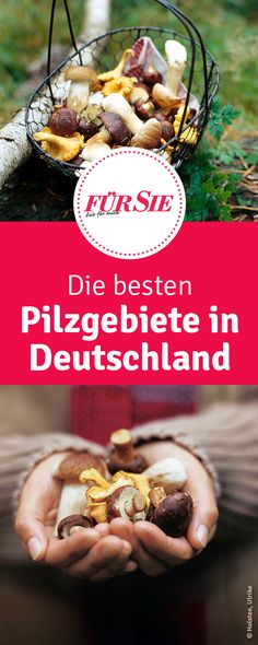 The best mushroom areas in Germany - We show you where you can find the most mushrooms in Germany. Diet Planner, Weekly Meal Planner, Cupcake Recipes, Snack Recipes, Mind Diet, Paleo Mom, Healthy Snacks, Healthy Recipes, Stuffed Mushrooms