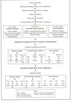 Classification of Aphasia Flowchart