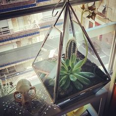 The new terrarium for protect the plants from my cat (not the skull). #plants #terrarium #skull #hippster #boho #bohochic #grunge #grungegirl #vintage #retro #awesome #illustration #triangleandcat