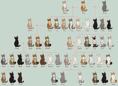 Family Tree -firestar- CANON by AnnMY.deviantart.com on @DeviantArt