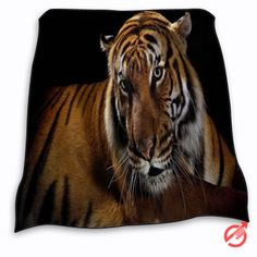 New Tiger beautiful Blanket