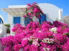 (13) Jardineria y Huertos Urbanos - Fotos - Google+