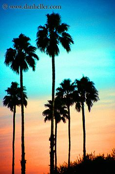 Turquoise and Peach Sky with Palm Trees I would LOVE to have this painted on my bedroom wall!