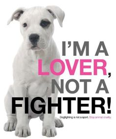stop dog fighting.. This is considered animal cruelty or abuse.. These poor animals are trained to fight for people to make money... How sad :(