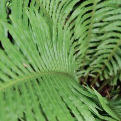 Get The Tropical Look - New Zealand Handyman Magazine