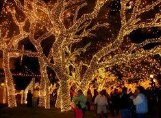 beautiful light decoration,,,
