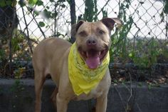 Foto: Lost his family and Doggie BFF WALKER Staten Island - NY TO BE DESTROYED…