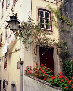 #Portugal Sintra - Escadinhas da Fonte da Pipa (by Lucypassos)