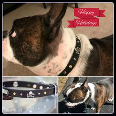 What a great collar. Elwood loves it as do I. Thank you! http://www.kippyandco.com/products/skull-and-crossbones-dog-collar