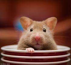Yo Wassup? Do ya got any cheese?