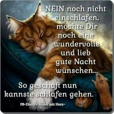 Good Night Wishes, Good Morning Good Night, Fairy Wallpaper, German Quotes, Romantic Pictures, Wishes Images, Morning Greeting, Photography Logos, Friendship