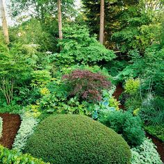 Pay Attention to Shapes. Go beyond color and texture to make your garden a showpiece. Use plant shapes to draw the eye. For example a straight edge border of variegated bishop's weed creates a line that contrasts a tightly clipped boxwood and loose mounds of Japanese maple, hosta, and other perennials.  Stunning, I love this!!