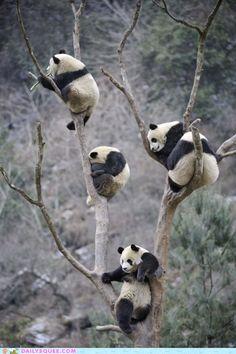 Oh. My it's a Panda Tree.