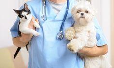 Groupon - Revisión para perro o gato por 16,95 € y con vacunas desde 25,95 €. Tienes 3 clínicas a elegir en Varias localizaciones. Precio de la oferta Groupon: 16,95€
