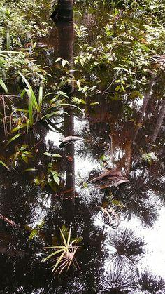 Tambopata Nature Reserve, Peruvian Amazon Basin. Photo: Maria Friel via Flickr