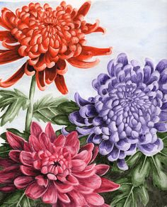 chrysanthemums by russiawantsvodka - made with watercolors, could be with colored pencils.
