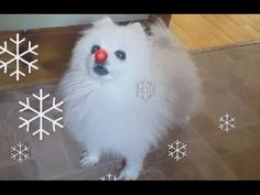 Gabe the Dog Barks a Festive Cover of 'Rudolph the Red Nosed Reindeer' Dog Barking Video, Rudolph The Red, Red Nosed Reindeer, New Theme, Cat Memes, Funny Animals, Songs, Make It Yourself, Pets