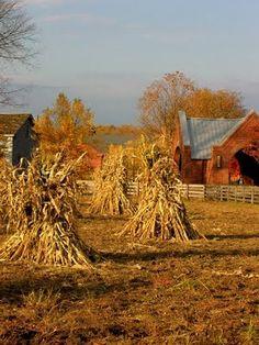 Haystalks