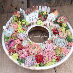 Fairy Garden Pots, Dish Garden, Garden Terrarium, Succulent Terrarium, Succulent Arrangements, Cacti And Succulents, Planting Succulents, Succulent Gardening, Container Gardening