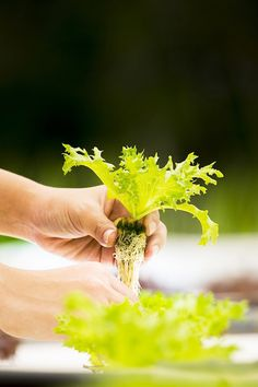 How to Set up a Hydroponic Garden in Your Home Container Vegetables, Container Gardening, Gardening Tips, Hydroponic Plants, Growing Plants, Plant Decor, Dream Garden, Indoor Plants, Herbs
