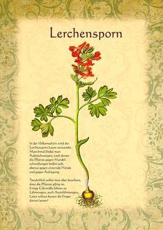 Lerchensporn http://www.kraeuter-verzeichnis.de/