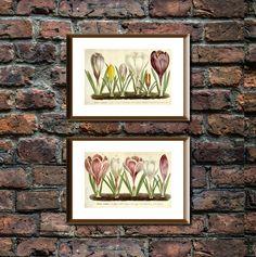Crocus Flower Poster/Plant Art/Nature Poster/Crocus Combo Print/Green/Vintage Crocus/Vegetable Wall Art/Printable Art As You Like, Just In Case, Frame Download, Nature Posters, Plant Art, International Paper Sizes, Vintage Clip, Etsy App, Art Nature