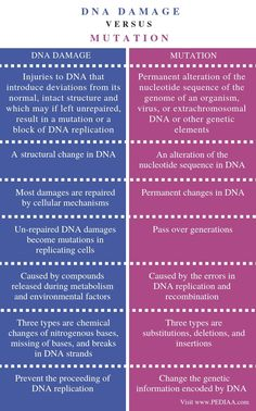 Difference Between DNA Damage and Mutation - Comparison Summary Dna Facts, Biology Facts, Study Biology, Biology Lessons, Teaching Biology, Science Biology, Medical Science, Cell Biology, Biochemistry Notes