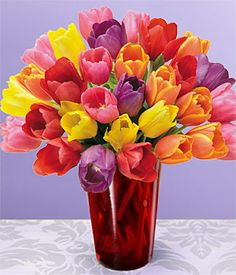 Tulips - Google Search