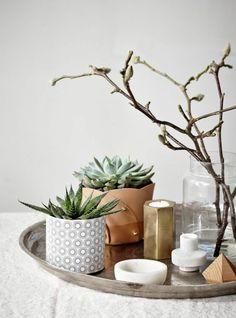 gemütliches zuhause zimmerpflanzen