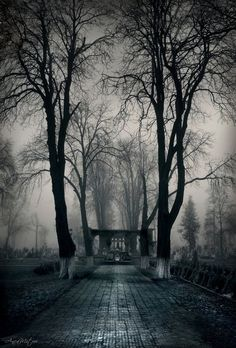 Cemetery gates, by AncaMitroi. That is just so pretty, in a creepy way.