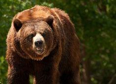 Unbearable Grizzly Bear Jokes