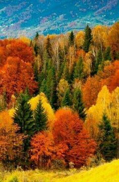 Beautiful fall, most amazing time of the year❣😍🍁🍂🍎 Fall Pictures, Fall Photos, Nature Pictures, All Nature, Amazing Nature, Autumn Scenes, Autumn Aesthetic, Nature Scenes, Beautiful Landscapes