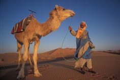 295_1toureg___camel.jpg (1788×1200)