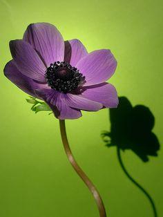 green and purple Purple Aesthetic, Aesthetic Photo, Shades Of Purple, Pink Purple, Purple Haze, Or Violet, Purple Themes, Scenery Photography, Purple Garden