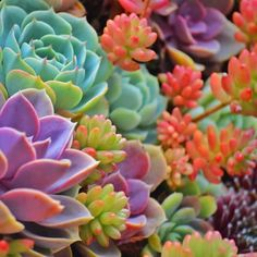 Idea Of Making Plant Pots At Home // Flower Pots From Cement Marbles // Home Decoration Ideas – Top Soop Succulent Gardening, Planting Succulents, Garden Plants, House Plants, Planting Flowers, Succulent Plants, Cactus Planta, Cactus Y Suculentas, Cactus Flower