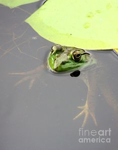 Froggy floating in a pond