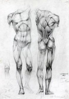 Human Body Art Male Figure Drawing Reference 25 New Ideas Human Figure Drawing, Figure Drawing Reference, Anatomy Reference, Life Drawing, Pose Reference, Human Body Drawing, Drawing Male Bodies, Academic Drawing, Drawing Studies