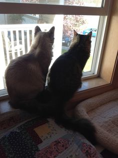 Sammy and Mimi lookin' out from the bedroom....