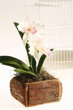 Orquídeas de biscuit