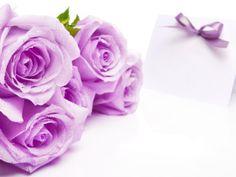 růže_HD_tapeta15