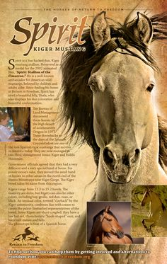 Spirit | Return to Freedom Wild Horse Preservation & Sanctuary