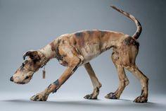 Art in Clay, Elaine Peto