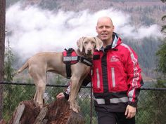 Search and Rescue Workmates… Weimaraner Hero, but aren't they all?