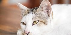 If you had the chance to save an animal's life, would you do it? So many cats could use a great home. All that is needed is for someone to adopt them and offer proper care. These things can be learned about within this article.