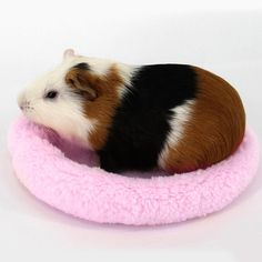 PulisonTMPet Beds Mat Soft Fleece Guinea Pig Bed Winter Small Animal Cage Mat Hamster Sleeping Bed Light blue -- Find out more testimonials of the product by seeing the link on the photo. (This is an affiliate link). Cage Petit Animal, Small Animal Cage, Hamster Bedding, Guinea Pig Bedding, Chinchilla, Small Hamster, Small Cat, Hamsters As Pets, Cute Small Animals