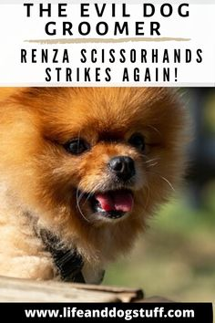 The Evil Dog Groomer - Renza Scissorhands Strikes Again!. #dogs #funnydogs #doghumor