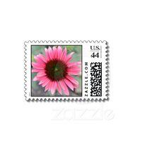 Beautiful Echinacea Flower Postage