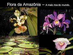 Flora da Amazônia – A mais rica do mundo.. Destruição da Amazônia.