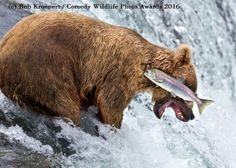 """2016 Finalists :: Comedy Wildlife Photography Awards - Conservation through Competition. """"Dammit! I need my eyes checked!"""""""